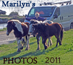 click here to see marilyn's latest photos of Salthouse