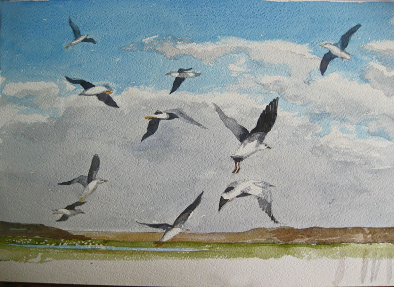 val trying to finish off  seagull pic begun ages ago and abandoned