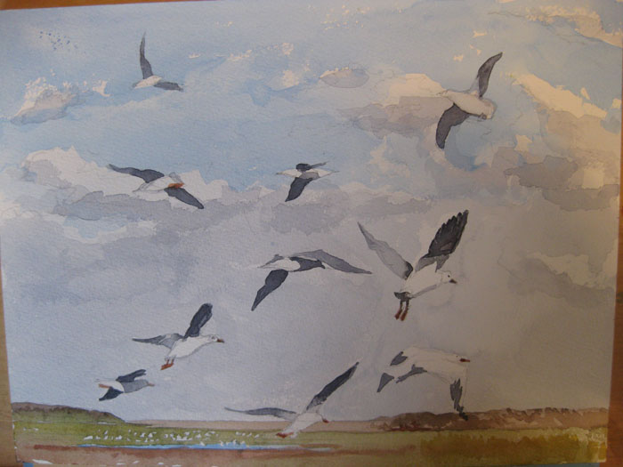 Val's seagulls rising