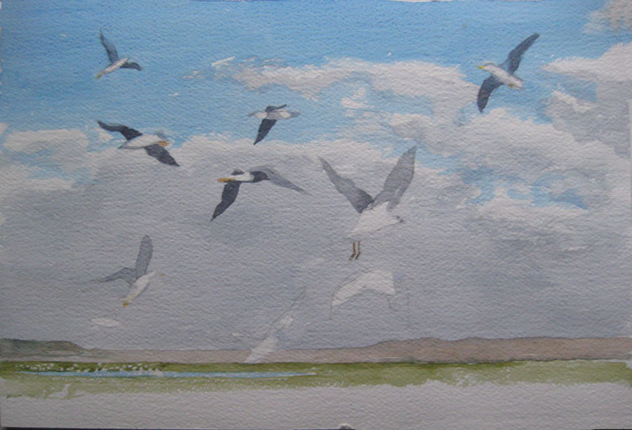 Val's second (bigger) seagull picture begun