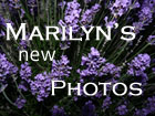 click here to see Marilyn's latest pictures
