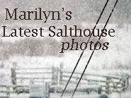 click here to see Marilyn's photos